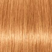 Купить Стойкая крем-краска для волос Indola Professional (2285357, P.14, Персиковый блонд, 60 мл, Блонд Эксперт), Indola (Германия)